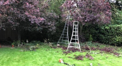 Tree surgery Melton Mowbray